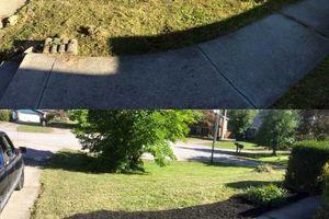 Photo #4: Pantoja Lawn Care