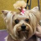 Photo #2: Smart Pets Grooming. Same Day Availibility!