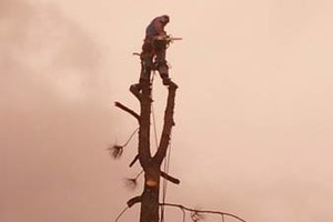 Photo #6: $25.00/hr Professional Tree Trimmer