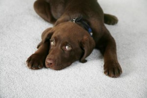 Photo #3: Tufts Carpet Cleaning! $99!