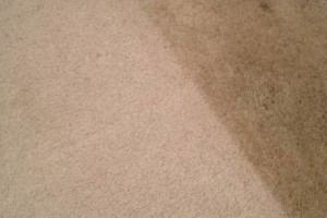 Photo #9: Tufts Carpet Cleaning! $99!