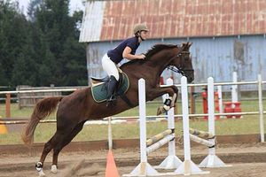 Photo #6: Horse training, lessons and boarding