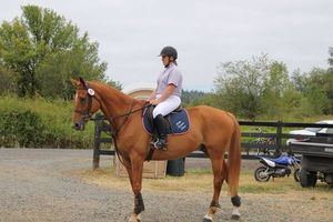 Photo #7: Horse training, lessons and boarding