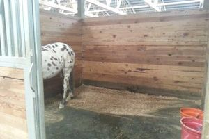 Photo #9: Horse training, lessons and boarding