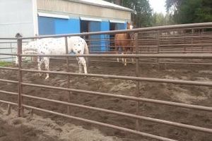 Photo #10: Horse training, lessons and boarding