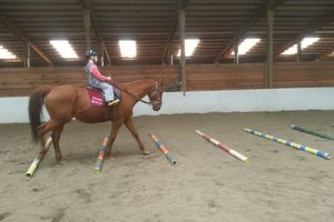 Photo #11: Horse training, lessons and boarding