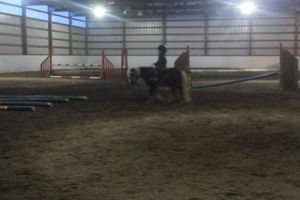 Photo #12: Horse training, lessons and boarding