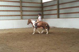 Photo #13: Horse training, lessons and boarding