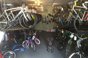 Photo #5: Southwest Bicycle. Bike Love from Bicycle Repairman