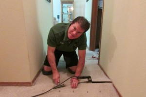 Photo #9: A+ Carpet Cleaning in Beaverton/Portland