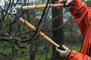 Photo #1: Winter Yard & Garden Care: clean up, pruning, and more