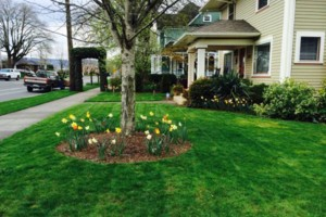 Photo #11: Oregon's superior Landscape & design. Lawn maintenance free...