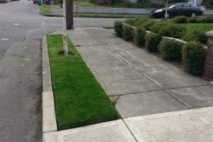 Photo #1: Steve Roods Lawn care. Quality Lawn & Yard care since 1989