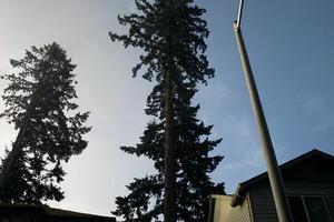 Photo #4: JUHLIN'S TREE SERVICE