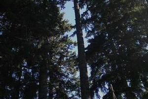 Photo #2: JUHLIN'S TREE SERVICE
