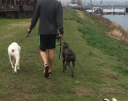 Photo #1: Need a new or backup dog walker?