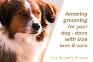 Photo #6: Amazing Grooming for Your Dog - Done With True Love & Care.