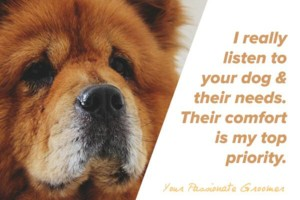 Photo #4: Amazing Grooming for Your Dog - Done With True Love & Care.