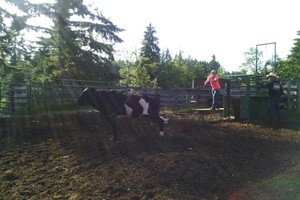 Photo #4: Riding/roping/daubing lessons