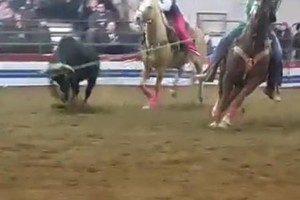 Photo #5: Riding/roping/daubing lessons