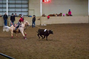 Photo #8: Riding/roping/daubing lessons