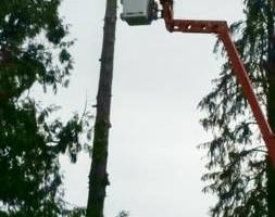 Photo #23: Eduardo's Tree.˜… 24 Hour Emergency services!