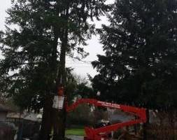 Photo #22: Eduardo's Tree.˜… 24 Hour Emergency services!