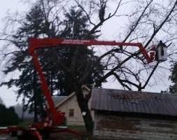 Photo #21: Eduardo's Tree.˜… 24 Hour Emergency services!