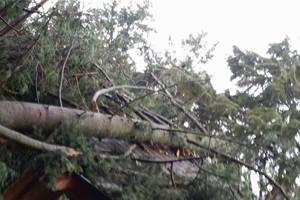 Photo #20: Eduardo's Tree.˜… 24 Hour Emergency services!