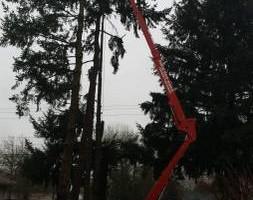 Photo #19: Eduardo's Tree.˜… 24 Hour Emergency services!