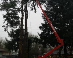 Photo #18: Eduardo's Tree.˜… 24 Hour Emergency services!