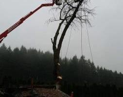 Photo #17: Eduardo's Tree.˜… 24 Hour Emergency services!