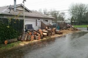 Photo #16: Eduardo's Tree.˜… 24 Hour Emergency services!