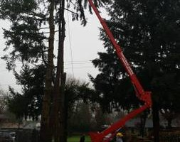 Photo #14: Eduardo's Tree.˜… 24 Hour Emergency services!