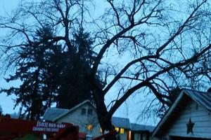 Photo #13: Eduardo's Tree.˜… 24 Hour Emergency services!