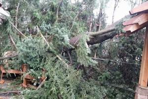Photo #12: Eduardo's Tree.˜… 24 Hour Emergency services!