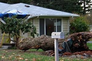 Photo #8: Eduardo's Tree.˜… 24 Hour Emergency services!
