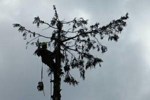 Photo #6: Eduardo's Tree.˜… 24 Hour Emergency services!