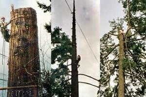 Photo #5: Eduardo's Tree.˜… 24 Hour Emergency services!
