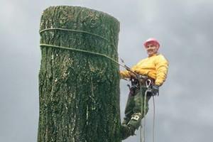 Photo #4: Eduardo's Tree.˜… 24 Hour Emergency services!