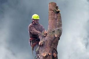 Photo #2: Eduardo's Tree.˜… 24 Hour Emergency services!