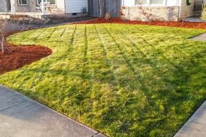Photo #1: Lawn care (Edging, Mowing)