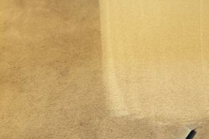 Photo #6: Club Carpet Cleaning and Odor Pro