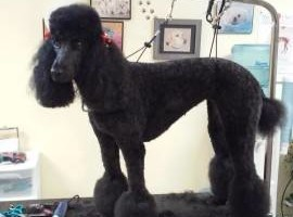 Photo #8: A Cut Above dog grooming
