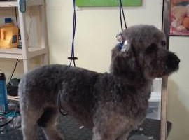 Photo #6: A Cut Above dog grooming