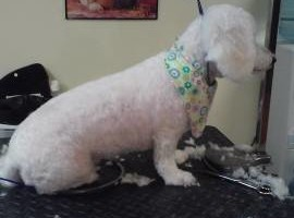 Photo #5: A Cut Above dog grooming