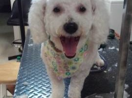 Photo #4: A Cut Above dog grooming