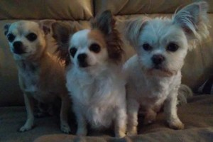 Photo #3: A Cut Above dog grooming