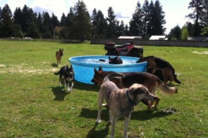 Photo #11: Natures Way Dog Training LLC Specialize in Behavioral/ Training Camp