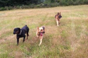 Photo #8: Natures Way Dog Training LLC Specialize in Behavioral/ Training Camp